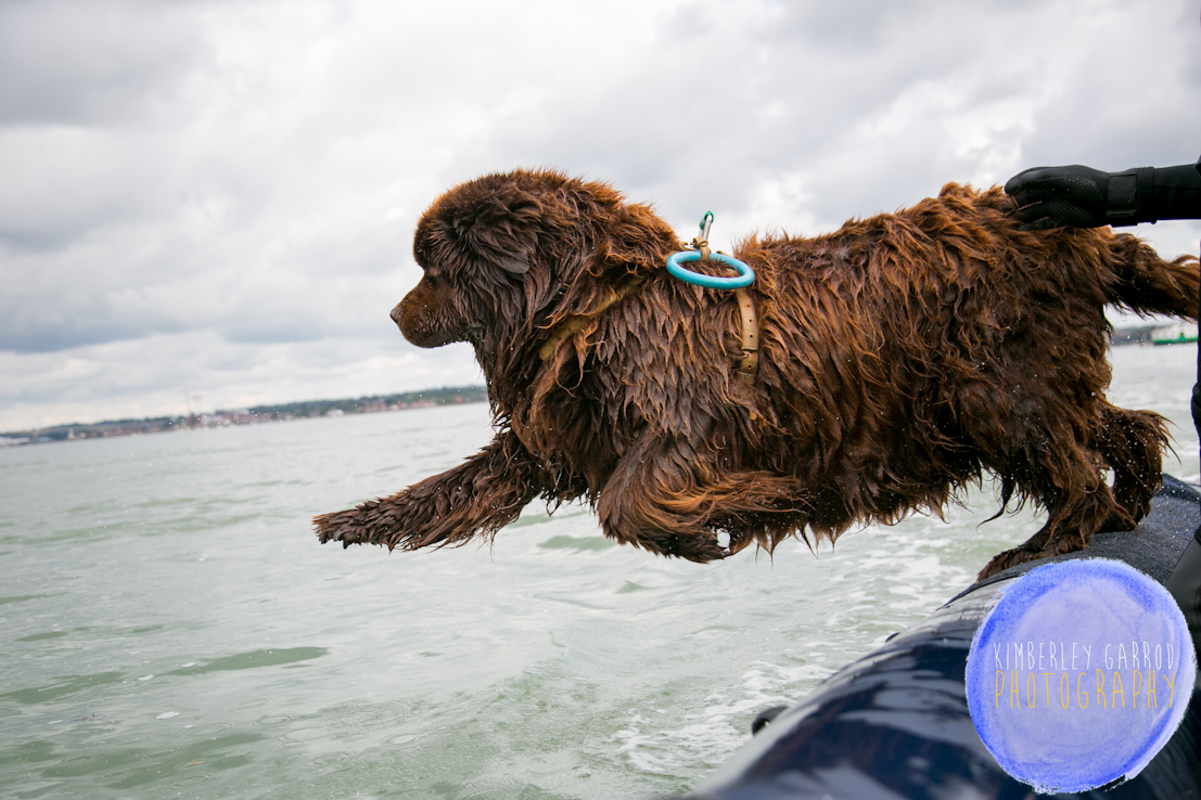 Newfoundland Dog Rescue for Parkinson's UK photography by Kimberley Garrod Photography