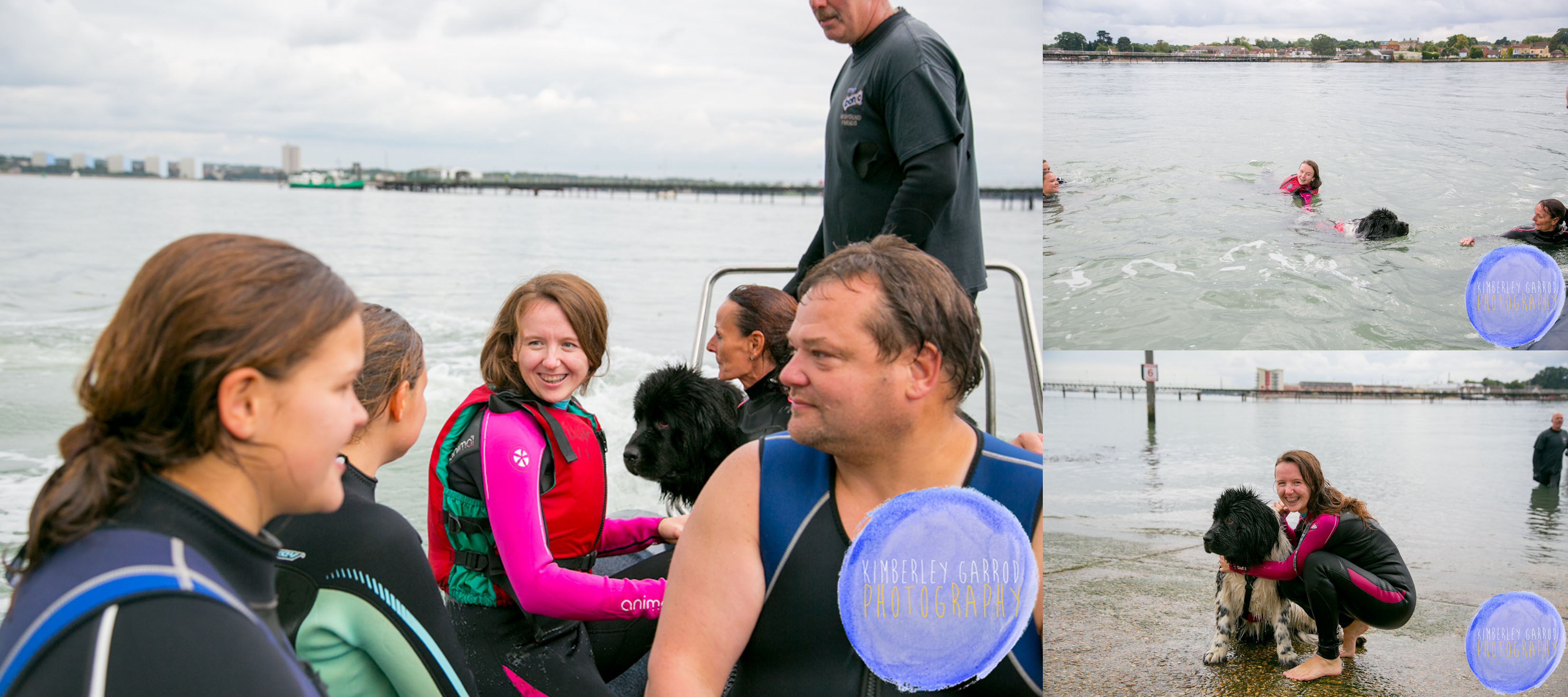 Newfoundland dogs rescue 5th October 2013 Southampton.